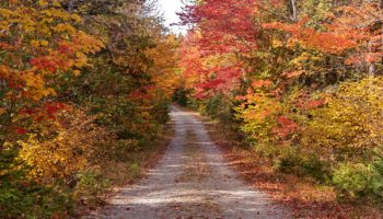 Driving in Maine's North Woods - What You Need to Know