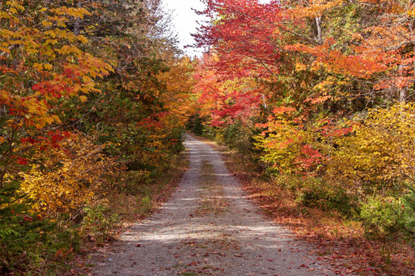 Dirt Road Foliage