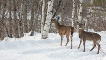 Northern Outdoors Launches New Mobile-Friendly Maine Deer Hunting & Fishing Site