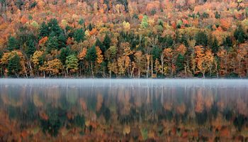 "It's Maine's Leaf Hunting Season!! How To Do More Than Just ""Drive Thru"" The Fall Show"