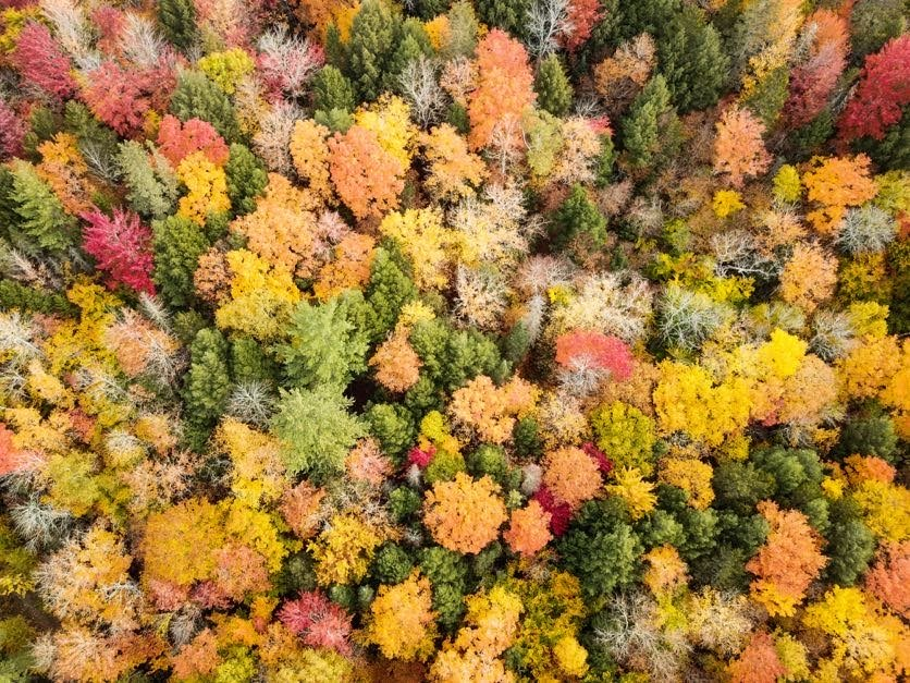 Birds Eye view of foliage in The Forks, Maine
